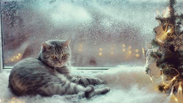 Обои Серый кот у окна с елочкой