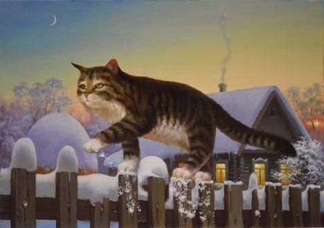 Обои Кот идет по забору около дома под луной