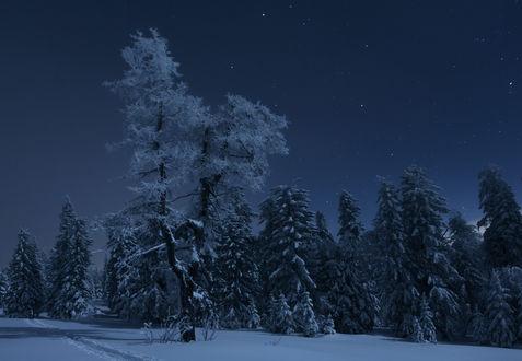 Обои Зимний пейзаж ночью, фотограф marateaman