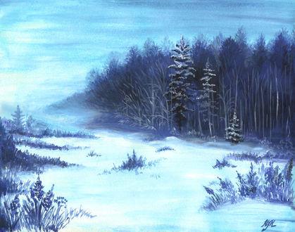 Обои Картина с опушкой леса, покрытой снегом зимой