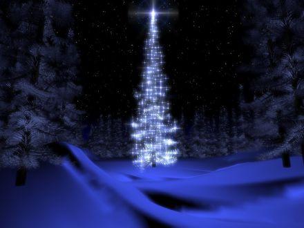 Обои Наряженная новогодняя елка в лесу под звездным небом