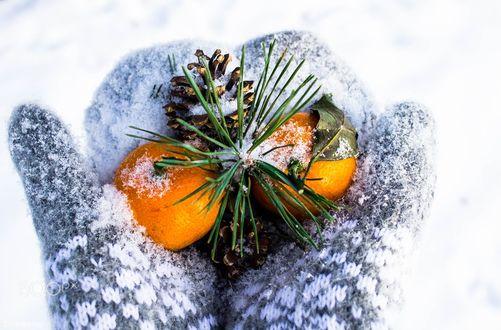Обои В руках девушки в варежках лежат мандарины и шишки с еловой веточкой, фотограф Evgeniy Vegele