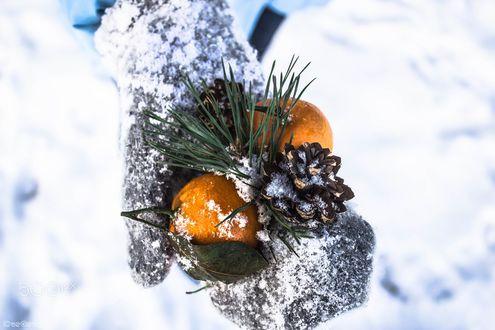 Обои В руке девушки в варежке лежат мандарины и шишки с еловой веточкой, фотограф Evgeniy Vegele
