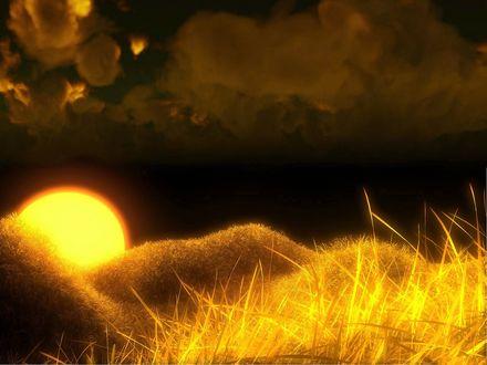 Обои Золотые колосья в лучах заходящего солнца