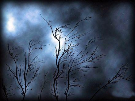 Обои Деревья стойко сопротивляются шторму