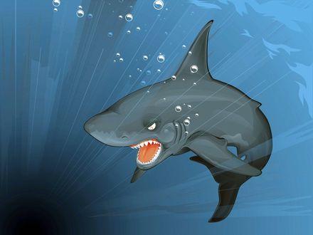 Обои Злобная акула с раскрытой красной пастью