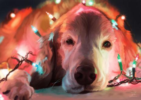 Обои Пес в новогодней гирлянде, by Zary-CZ