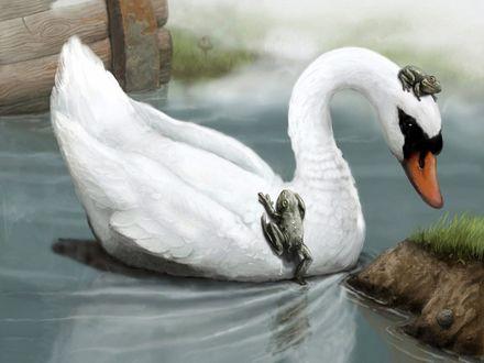 Обои Наглые лягушки взбираются на плавающего белого лебедя