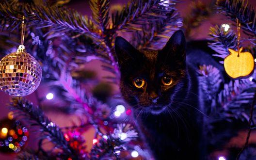 Обои Черный кот стоит у новогодней елки