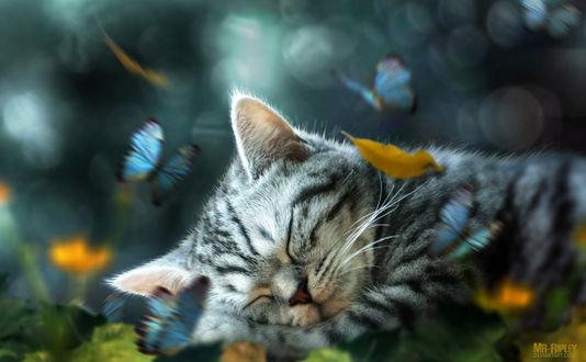 Обои Котенок спит в траве, над ним порхают бабочки, by Mr-Ripley