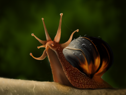 Обои Улитка на размытом фоне, by Snail King