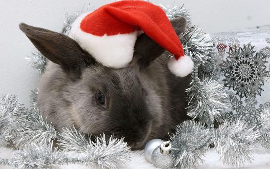 Обои Серый кролик в новогодней шапке лежит среди мишуры и шаров