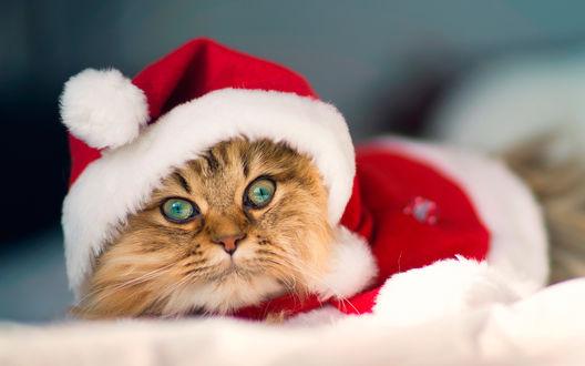 Обои Рыжий кот в косюме санты