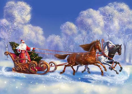 Обои Дед Мороз везет елку на санях запряженными в тройку лошадей по заснеженному лесу