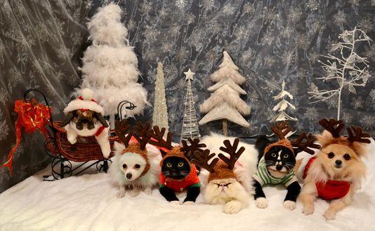 Обои Рождественские и новогодние коты и собачки