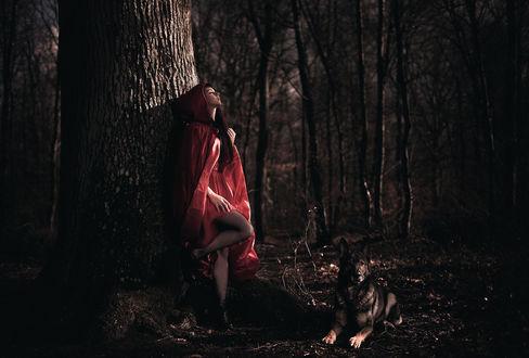 Обои Красивая девушка в красной накидке с капюшоном стоит в темном лесу прислонившись к дереву подняв голову к проблескам света рядом лежит собака