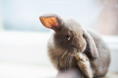 Обои Крольчонок на размытом фоне