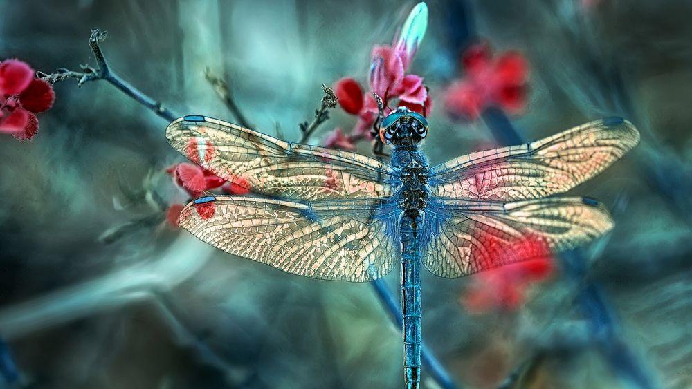 Бабочки стрекозы: картинки и фото стрекозы и цветы, скачать 99