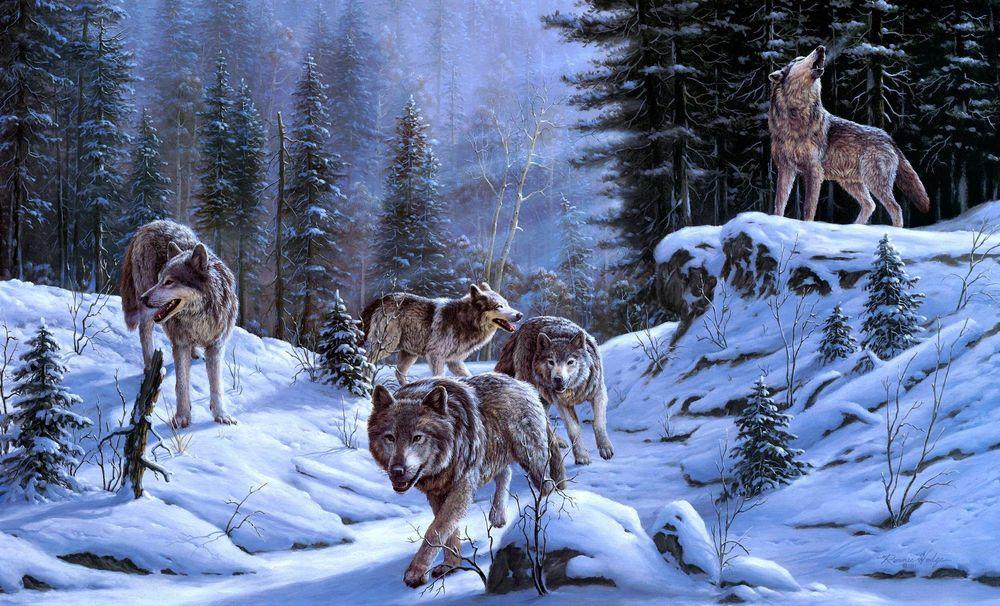 Картинки зима зайцы 1680х1050