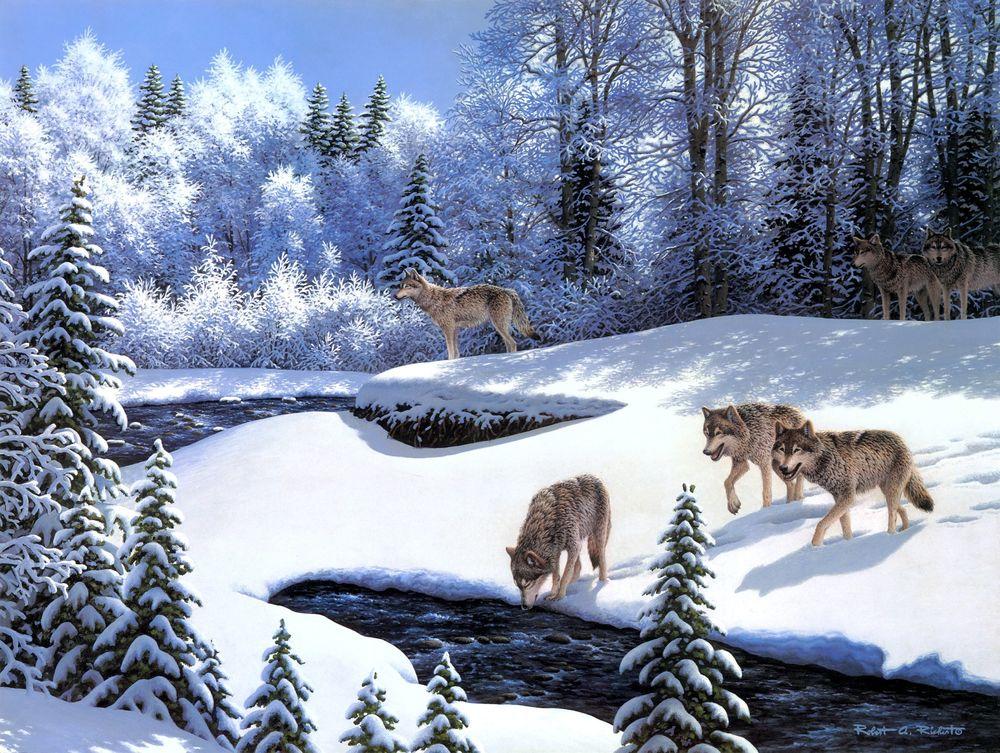 Волки и зима картинки