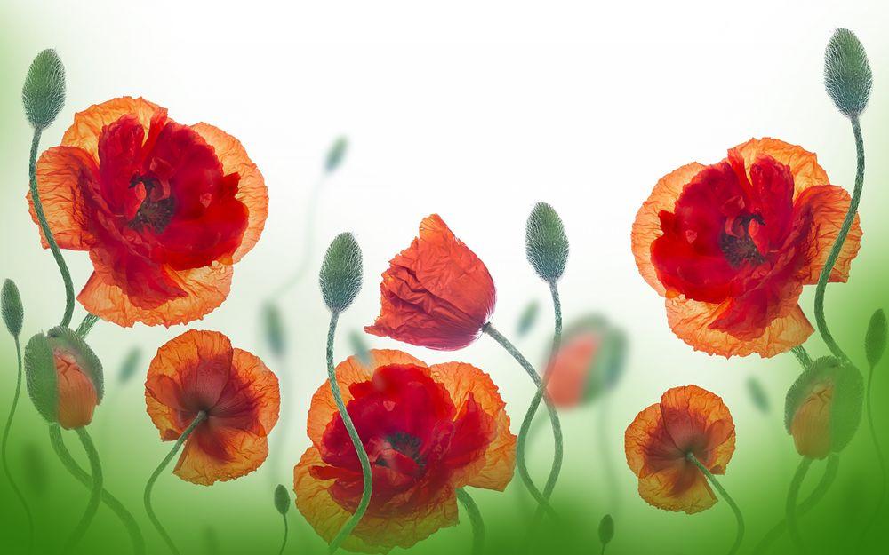 Обои цветы на светлом фоне