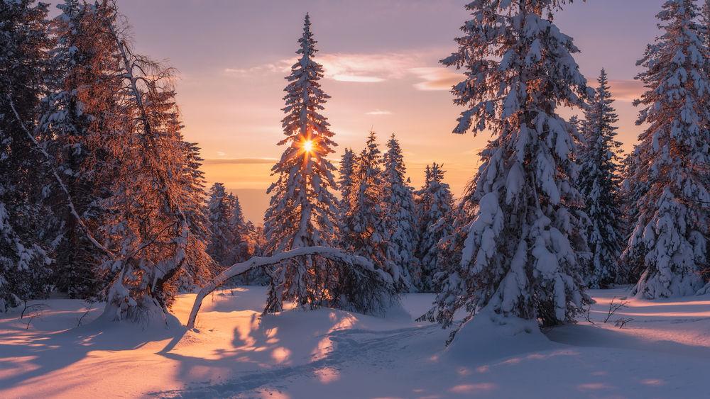 Картинки на рабочий стол зимний лес солнце на весь экран как круассаны