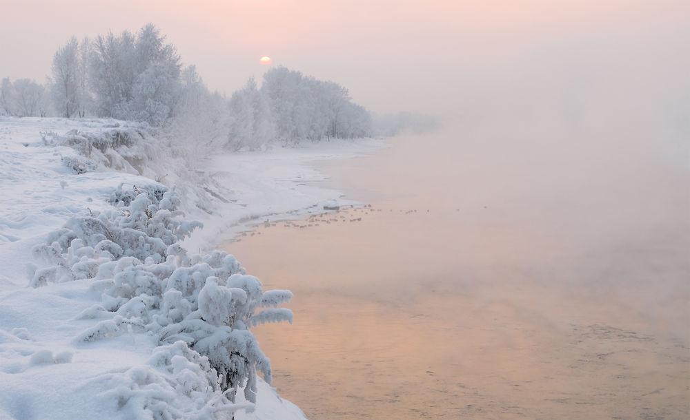 Обои для рабочего стола Работа Зимние цветы, Сибирь, Красноярск, река Енисей, фотограф Лещенок Александр
