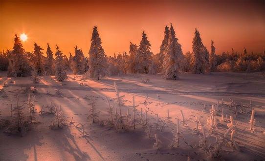 Обои Зимнюю природу освещает солнце, фотограф Evgeny 74