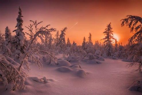Обои Уходящее солнце над заснеженными деревьями, фотограф Евгений Кужилев