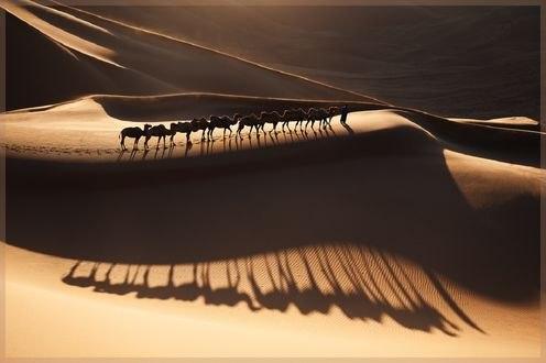 Обои Караван верблюдов с погонщиком, фотограф junheui song