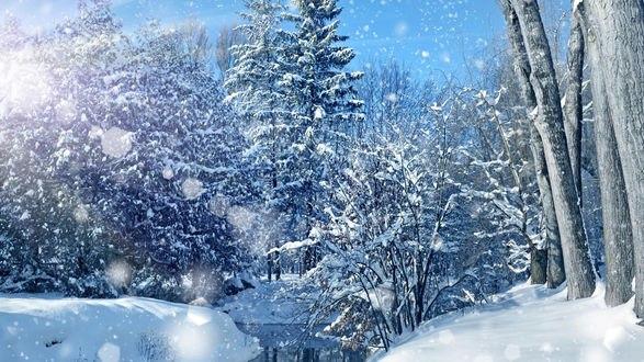 Обои Деревья в снегу