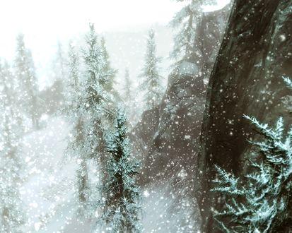 Обои Ели под падающим снегом, материк Тамриэль, арт по игре Skyrim / Скайрим