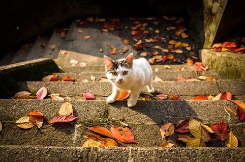 Обои Котенок на лестнице, покрытой осенними листьями