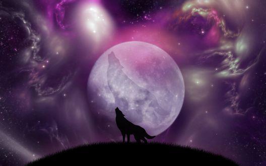 Обои Воющий волк на фоне луны и космическое небо