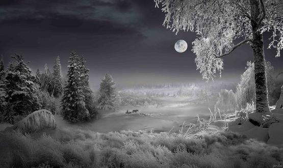 Обои Вечерний зимний пейзаж от фотографа Игоря Зенина