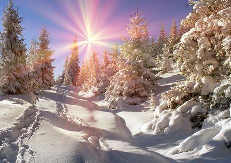 Обои Яркое зимнее солнце на голубом небе над заснеженными елями