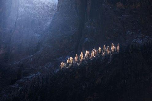 Обои Ели, на которые падает солнечный свет, фотограф Arild Heitmann