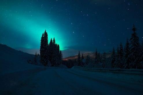 Обои Деревья на фоне северного сияния, фотограф Adnan Bubalo