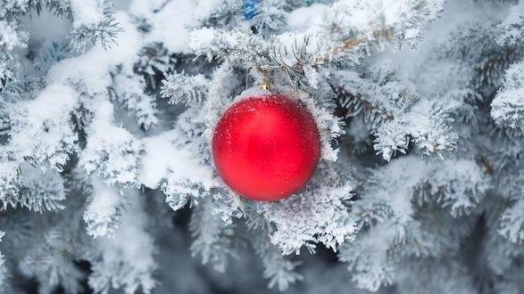 Обои Красный шар на елочной ветке в снегу, фотограф Elena Vagengeim