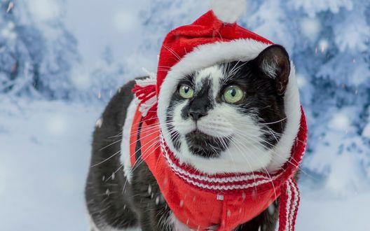 Обои Черно-белый кот в новогоднем костюме под падающим снегом