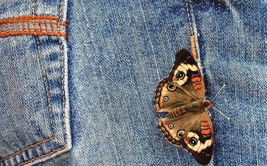 Обои Пестрая бабочка сидит на джинсах