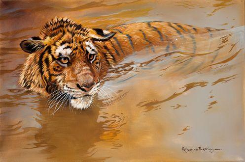 Обои Тигр плавает в воде, by Polly Anna Pickering / Поллианна Пиккеринг, Йоркшир, Великобритания