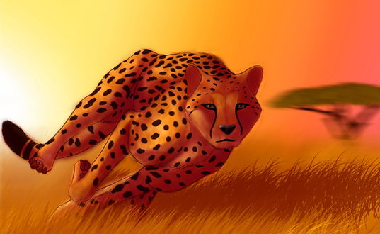 Обои Гепард с огромной скоростью несется за добычей