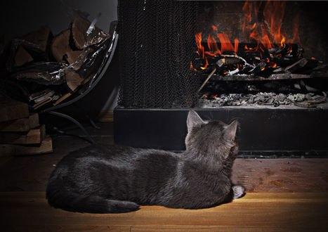 Обои Серый кот греется у горящего камина, лежат дрова