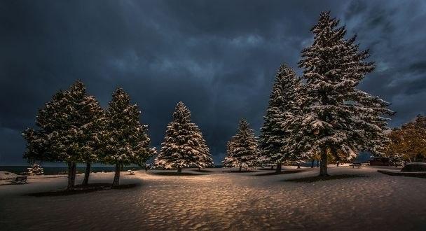 Обои Деревья в снегу на фоне неба, фотограф Jeffs