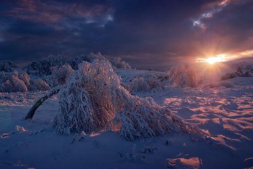 Обои Зимний пейзаж, склонившееся дерево на закате, снег