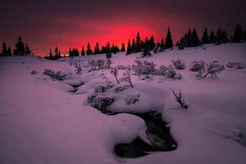 Обои Холодное розовое утро, фотограф Jоrn Allan Pedersen
