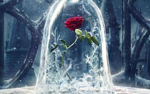 Обои Замороженная роза из фильма Красавица и чудовище / Beauty and the Beast