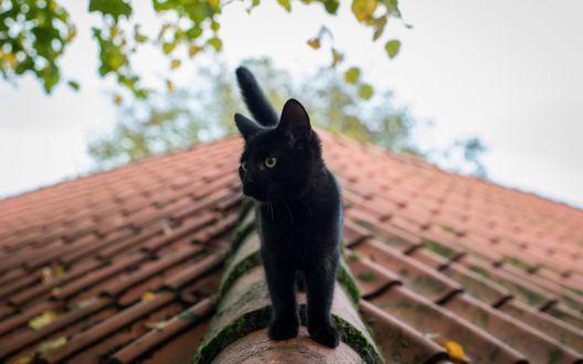 Обои Черная кошка стоит на крыше дома и смотрит в сторону