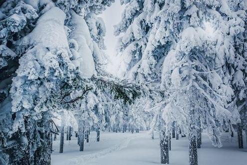 Обои Деревья в снегу, Урал, фотограф Кристина Пономарева